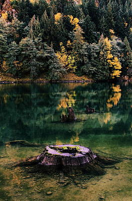 Green Lakes State Park Wall Art - Photograph - Diablo Lake Tree Stump by Benjamin Yeager