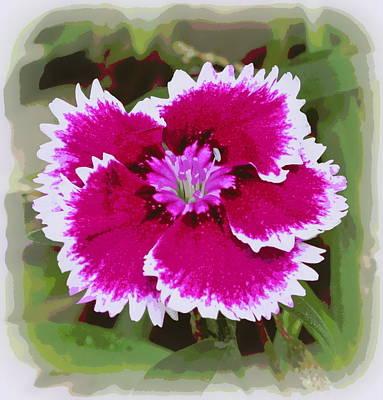 Photograph - Dianthus Barbatus 2 by Sheri McLeroy
