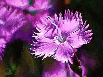 Photograph - Dianthus by Ludwig Keck