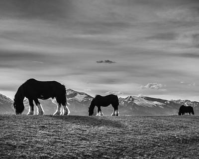 Photograph - Dick's Horses by Dianne Arrigoni