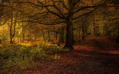 Trust Photograph - Did Someone Say Autumn? by Chris Fletcher