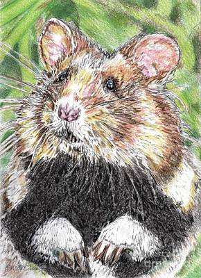 Drawing - Did Someone Say Nuts by J McCombie