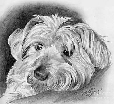 Dog Drawings Drawing - Did You Say Get Down by Suzanne Schaefer