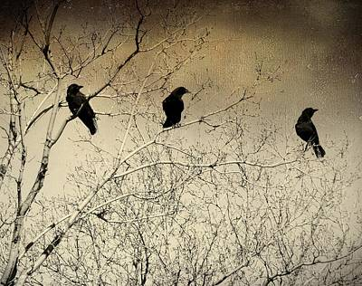 Gothicrow Photograph - Did You See That by Gothicrow Images
