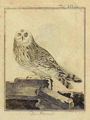 Stein Drawing - Die Stein Eule Or Church Owl by Philip Ralley