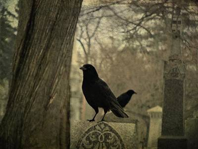 Two Crows Photograph - Different Diections by Gothicrow Images