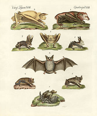 Parti Drawing - Different Kinds Of Bats by Splendid Art Prints