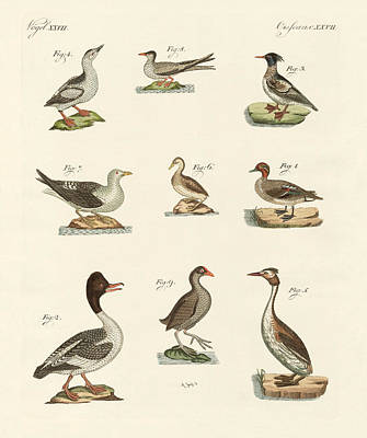 Oder Drawing - Different Kinds Of Waterbirds by Splendid Art Prints
