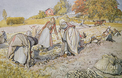 Horse-drawn Painting - Digging Potatoes by Carl Larsson