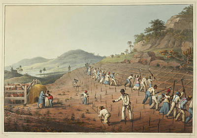 Slaves Photograph - Digging The Cane-holes by British Library