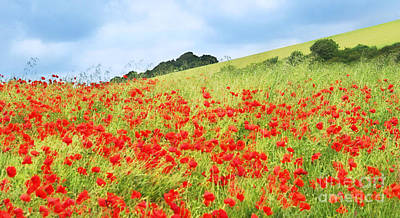Digital Art Field Of Poppies Art Print by Natalie Kinnear