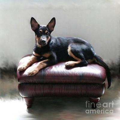 Dog Photograph - Digital Art Print For Sale by Isabella F Abbie Shores FRSA
