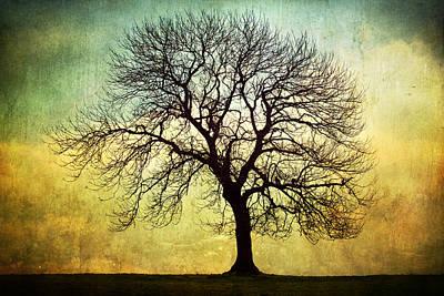 Digital Art Tree Silhouette Art Print by Natalie Kinnear