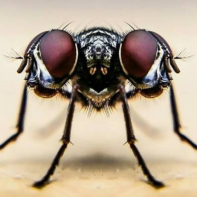 Digital Composite Image Of Housefly Art Print by Chris Raven / Eyeem