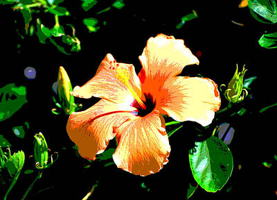 Photograph - Digital Orange Blossom Special by Linda Cox