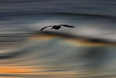 Photograph - Digital Pelican 73a2086 by David Orias