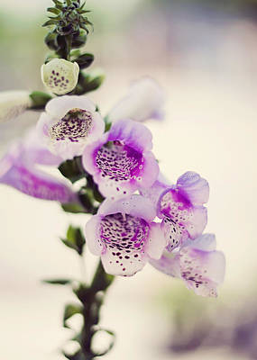 Photograph - Digitalis by Heather Applegate