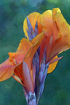 Photograph - Dimensional Beauty by Cindy McDaniel