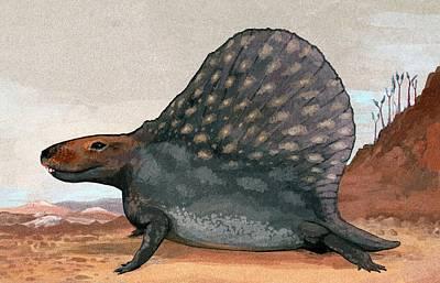 Paleozoology Photograph - Dimetrodon by Nemo Ramjet