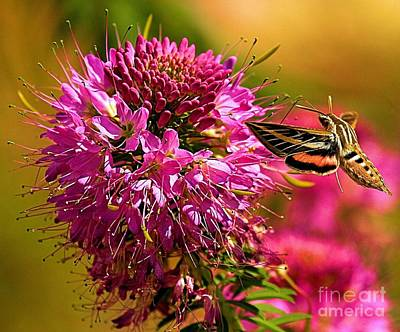 Photograph - Dining On Pink by Adam Jewell