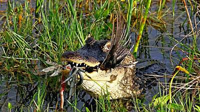 Photograph - Dinner In The Swamp by Ira Runyan