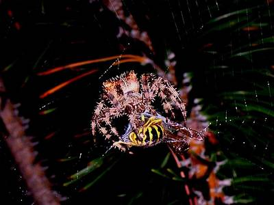 Spider Photograph - Dinner by Joe Hamilton