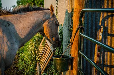Photograph - Dinnertime Abendessen by David Morefield