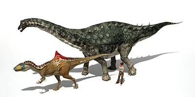 Paleozoology Photograph - Dinosaur Comparative Sizes by Jose Antonio Pe�as