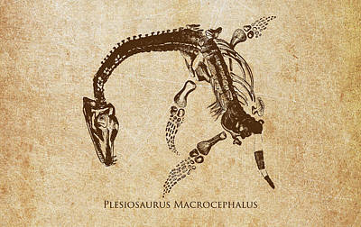 Skeleton Digital Art - Dinosaur Plesiosaurus Macrocephalus by Aged Pixel