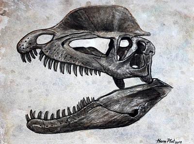 Dinosaur Skull Dilophosaurus Original by Harm  Plat