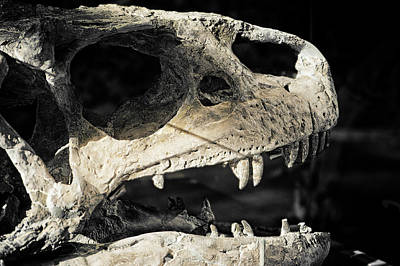 Photograph - Dinosaur Skull by Melany Sarafis