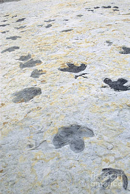 Photograph - Dinosaur Tracks by James Steinberg