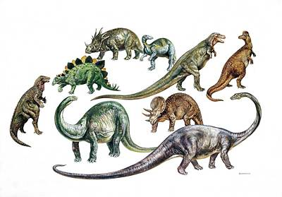 Paleozoology Photograph - Dinosaurs by Deagostini/uig