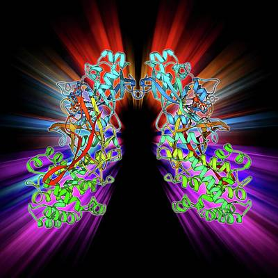 Molecular Structure Photograph - Diphtheria Toxin by Laguna Design