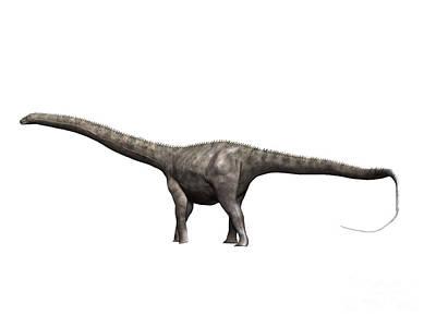 Diplodocus Dinosaur Art Print by Nobumichi Tamura