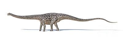 Diplodocus Digital Art - Diplodocus Dinosaur On White Background by Leonello Calvetti