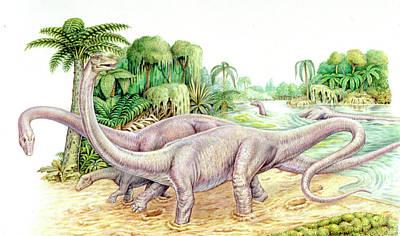 Trio Photograph - Diplodocus Dinosaurs by Deagostini/uig