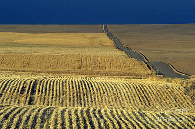 Photograph - Dirt Road Going Through Cut Wheat Fields by Jim Corwin