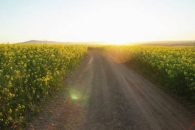 Photograph - Dirt Road In Field Of Flowers by Luka