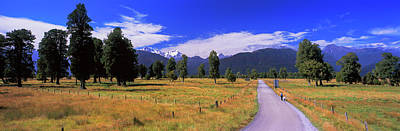 Fox Glacier Photograph - Dirt Road Passing Through A Field, Fox by Panoramic Images