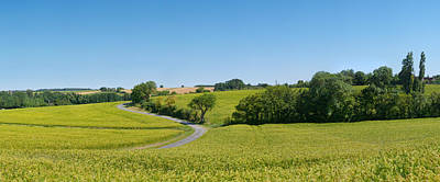 Dirt Roads Photograph - Dirt Road Passing Through A Flax Field by Panoramic Images