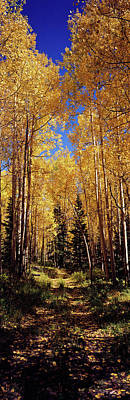 Dirt Roads Photograph - Dirt Road Passing Through Aspen Forest by Panoramic Images