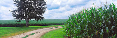 Dirt Roads Photograph - Dirt Road Passing Through Corn Field by Panoramic Images