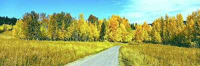 Dirt Roads Photograph - Dirt Road Passing Through Forest, Grand by Panoramic Images