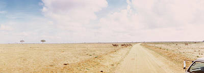 Dirt Roads Photograph - Dirt Road Passing Through Tsavo East by Panoramic Images