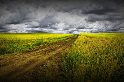 Photograph - Dirt Road Through A Canola Field by Randall Nyhof