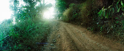 Dirt Road Through A Forest, Chiang Mai Art Print