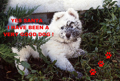 Photograph - Dirty Dog Christmas Card by Ginny Barklow