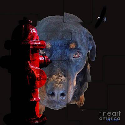 Photograph - Dirty Dog, Dirt,  What Dirt, Hole, What Hole by Mayhem Mediums