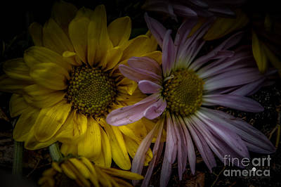 Photograph - Discarded Bouquet by Ronald Grogan